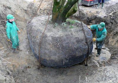 Arboricultura 1