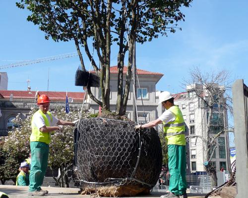 Arboricultura 2
